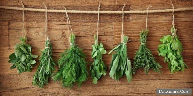 أعشاب طبيعية لعلاج الشباب نصائح