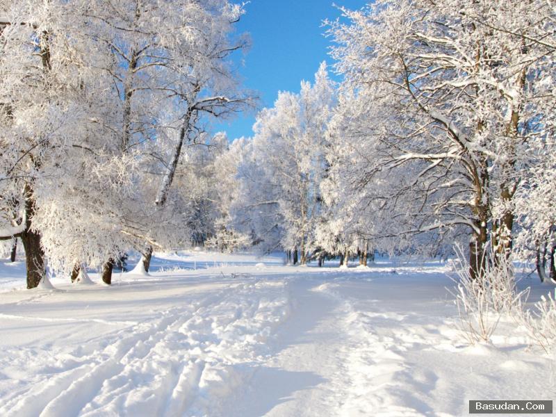 إرشادات مهمة للاعتناء بشعرك الشتاء
