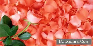 فوائد الورد الجمالية استخدامات الورد