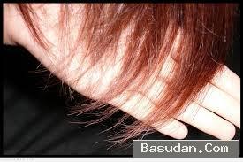 علاج تقصف الشعر التخلص الشعر