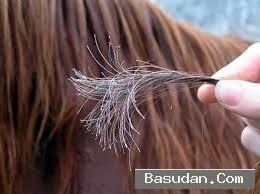 اسباب الشعر الغير حيوى الحفاظ