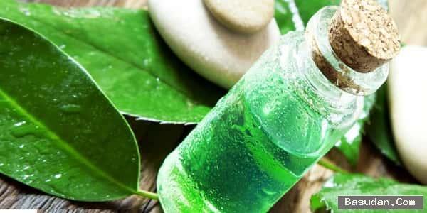 الشاي الأخضر اهميه الشاي الأخضر