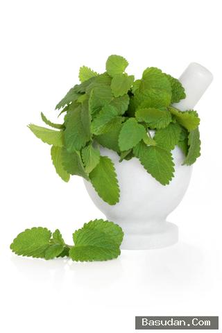 قناع الأعشاب لعلاج البثور قناع