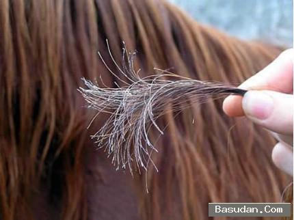أسباب تقصف الشعر علاج الشعر