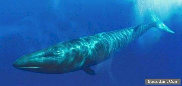 ضربات الحوت